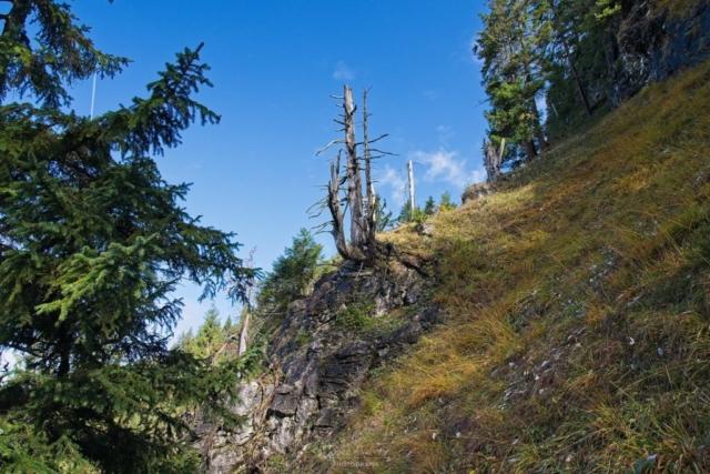 Toter Baum am Wegesrand