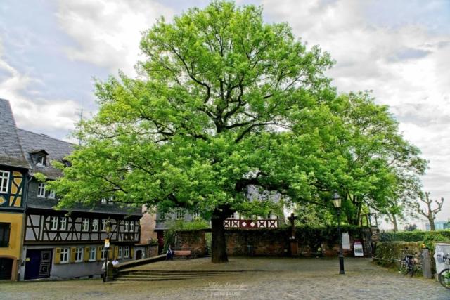 Markplatz mit Baum