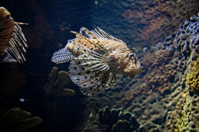 Aquarium auf Sylt
