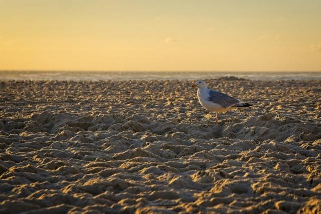 Einsame Möwe im Sand