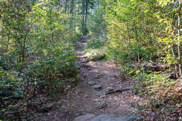 Wanderweg zum Arbersee