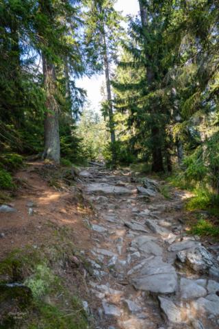 Steiniger Wanderweg